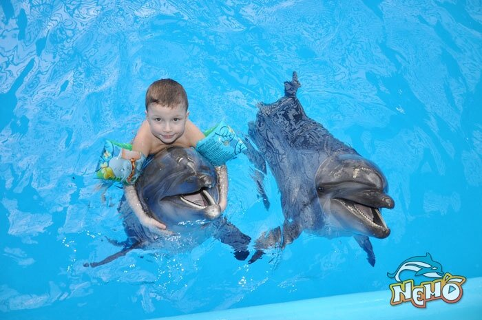 Альбом: Фото с дельфинами в...